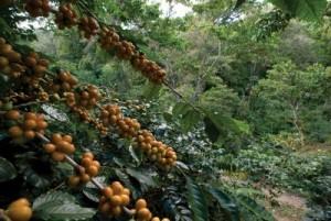 CoffeeTheWonderOfChiapas-90