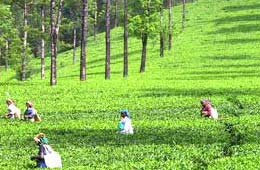 tea-tourism-in-india1